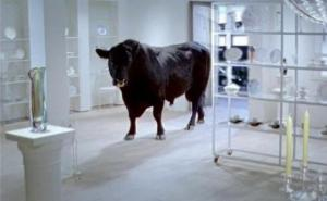 Bull in a china shop photo